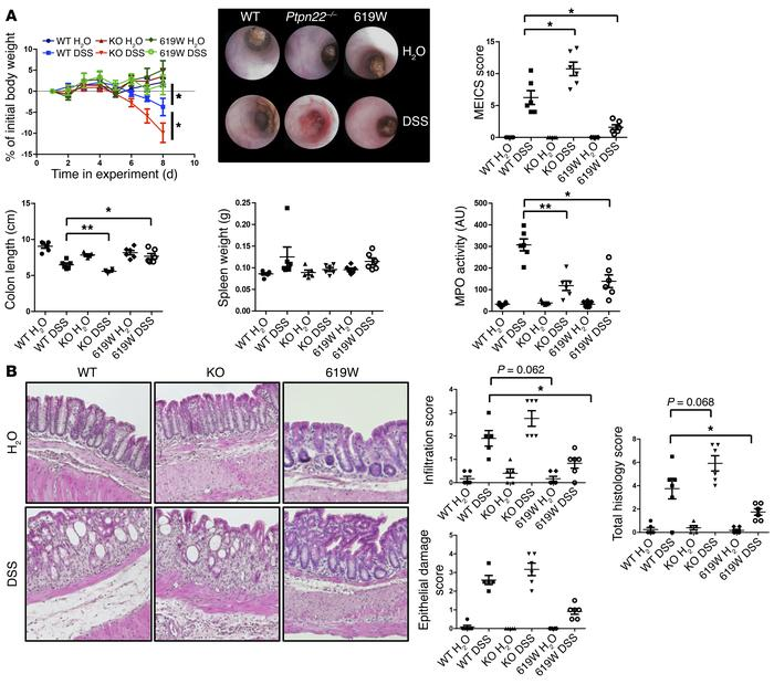 Loss of PTPN22 enhances colitis, while presence of the 619W variant is p...
