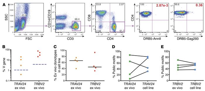 Ex vivo analysis of the Gag293-specific TCR repertoire. (A) Gating strat...
