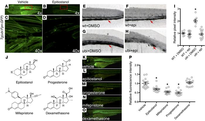 A small-molecule screen in transgenic zebrafish identifies compounds tha...