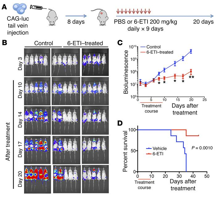 6-ETI inhibits tumor growth in a disseminated MM mouse model. (A) A sche...