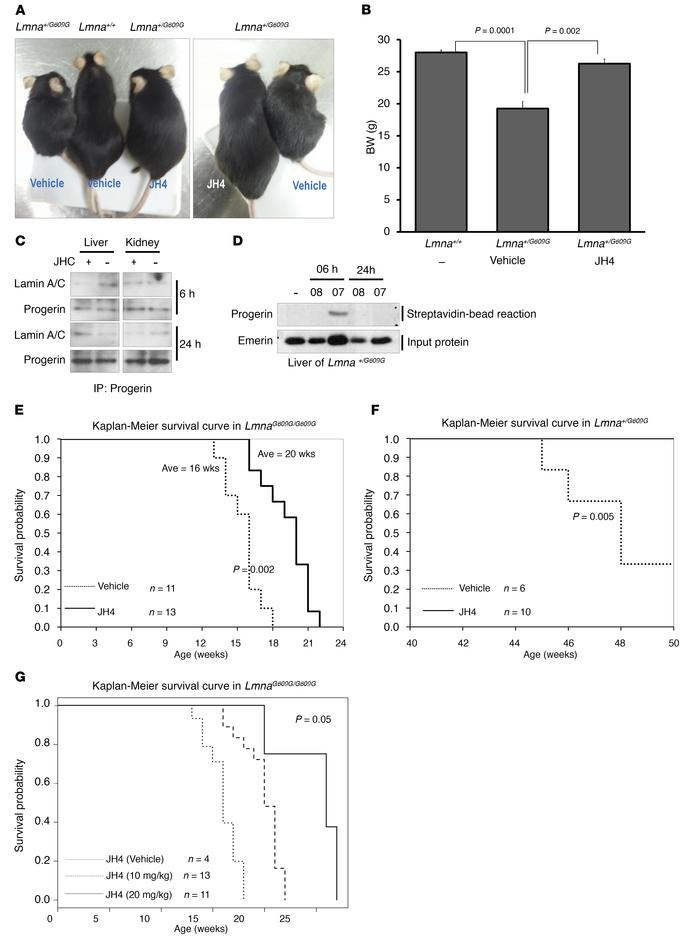 Lifespan extension in progerin-expressed mice. (A) Representative photog...