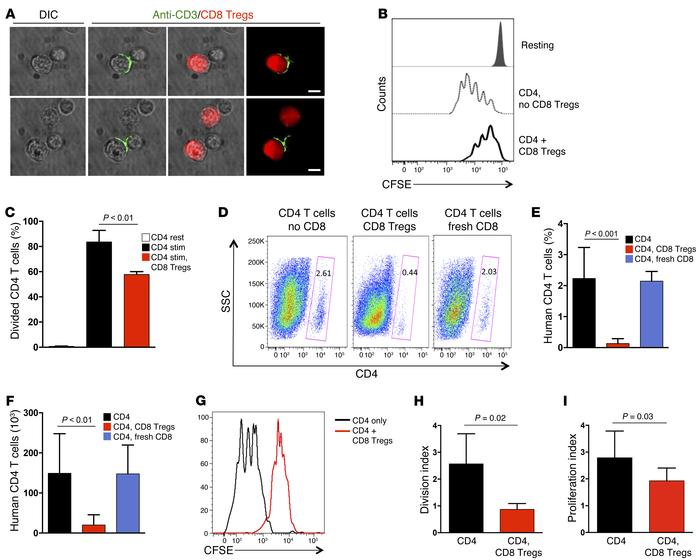 CD8 Tregs regulate CD4 T cell expansion in vitro and in vivo. (A) CD8 Tr...