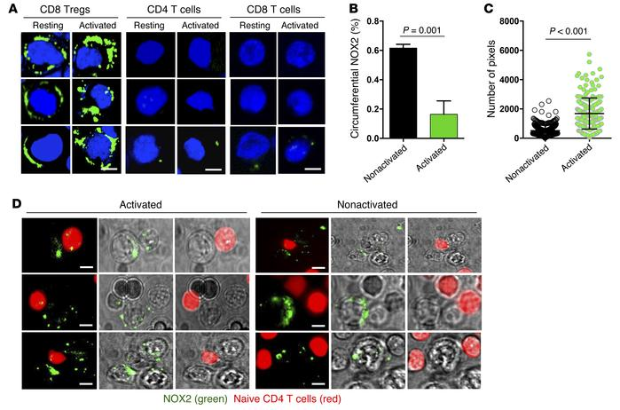 CD8 Tregs function by transferring NOX2 onto CD4 T cells. (A–C) Resting ...