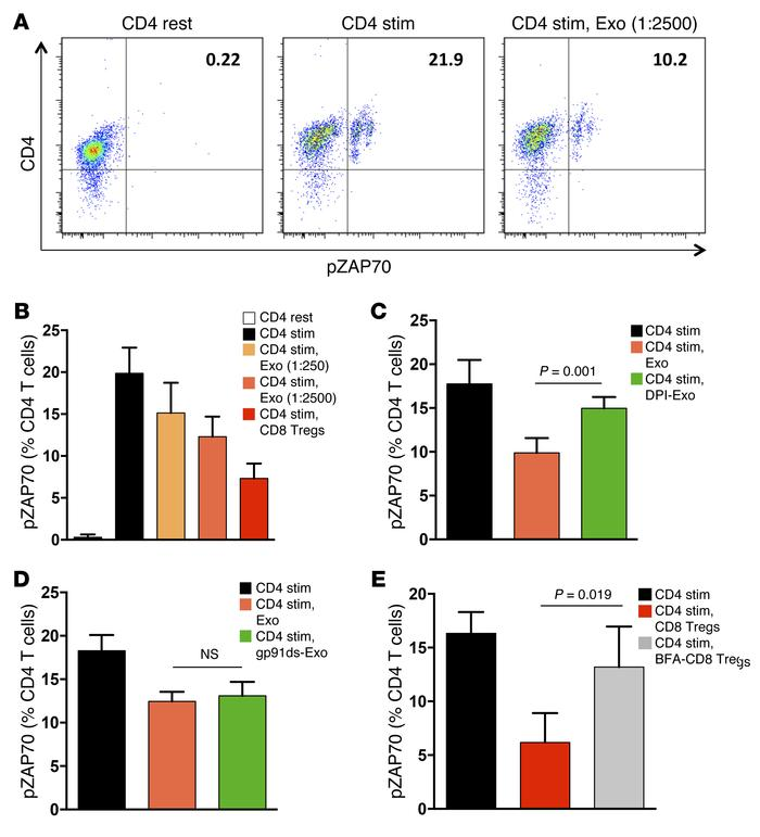 The suppressive function of CD8 Treg-derived exosomes depends on ROS pro...