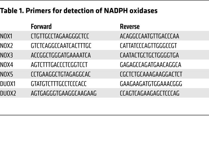 Primers for detection of NADPH oxidases