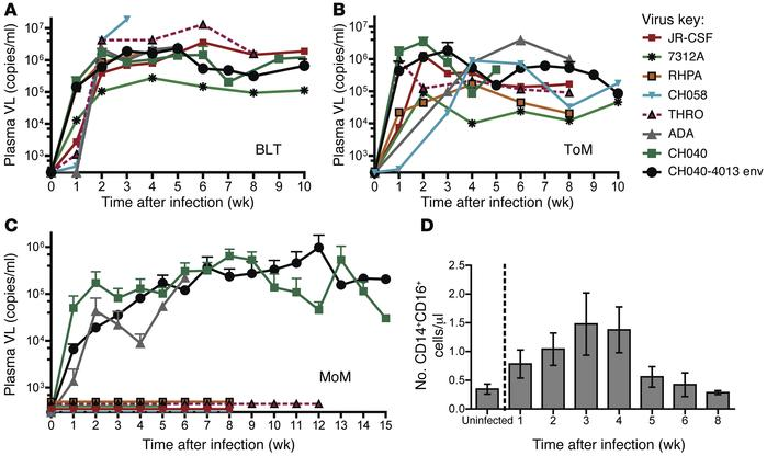 HIV replication can be sustained over time in human macrophages in vivo,...
