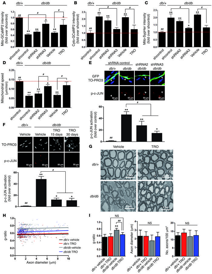 VDAC1 silencing and inhibition prevent SC mitochondrial anomalies and im...