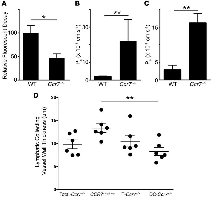 Lymphatic transport and permeability in CCR7-deficient mouse strains. (A...