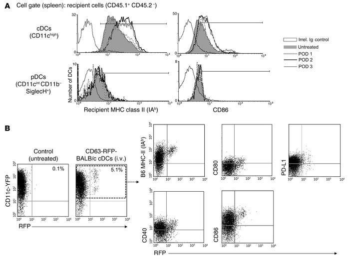 Transfer of exosomes promotes cDC maturation in the spleen. (A) Recipien...