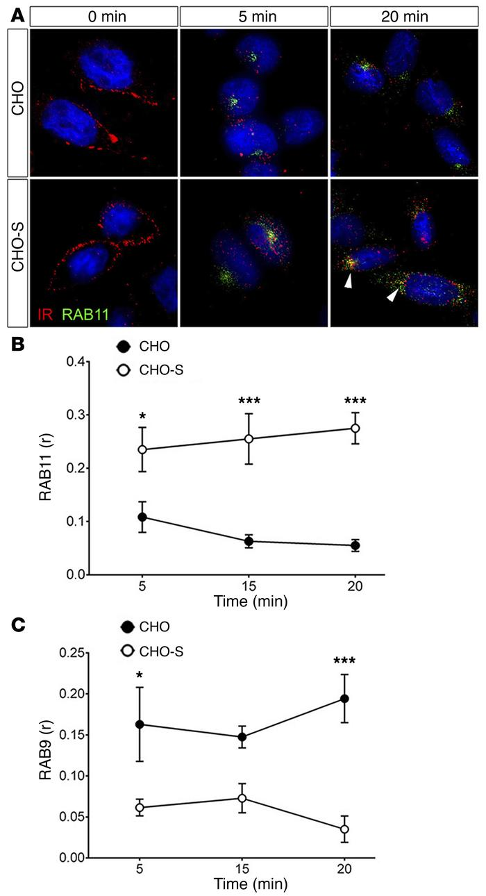 SORLA promotes cell surface recycling of internalized IRs in CHO cells. ...