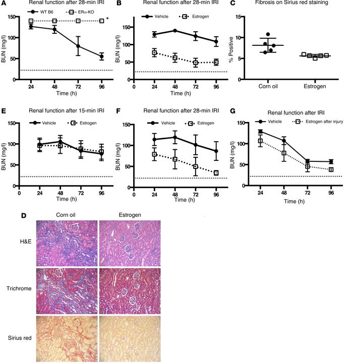 Role of estrogen in murine renal IRI. (A) ERα-KO mice (n = 5) had elevat...