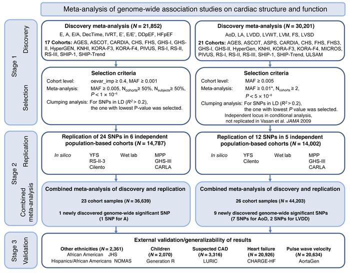 Flowchart of the analytical 3-stage approach. *For LV systolic dysfuncti...