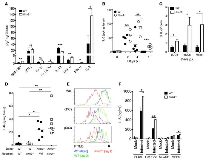 IFITM3 suppresses MCMV-induced IL-6 production. (A–C) WT and Ifitm3–/– m...