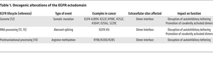 Oncogenic alterations of the EGFR ectodomain