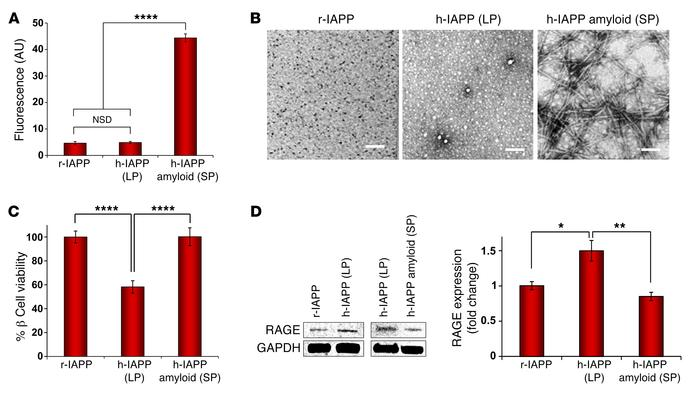 Toxic, preamyloid h-IAPP intermediates upregulate RAGE expression in β c...