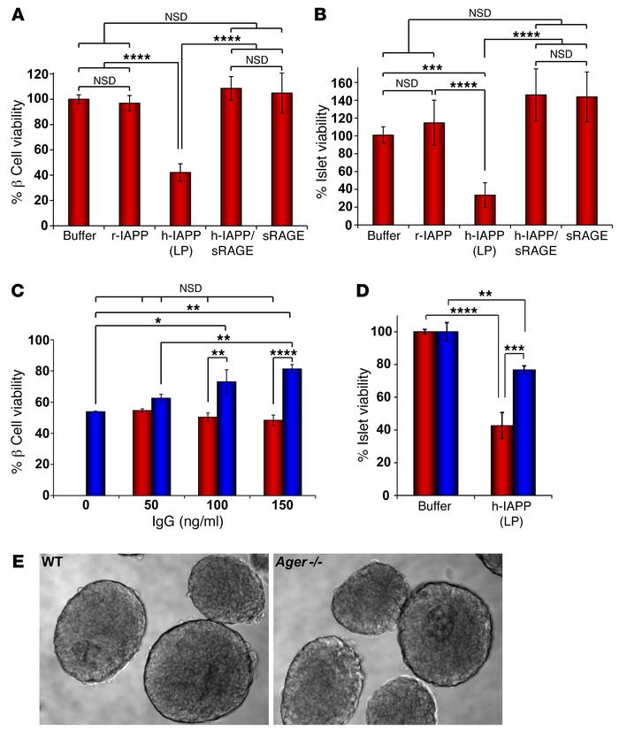 Blocking h-IAPP/RAGE interactions protects β cells and primary islets fr...