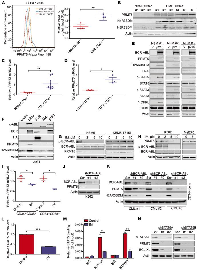 BCR-ABL activates PRMT5 expression in human CD34+ cells. (A) Flow cytome...