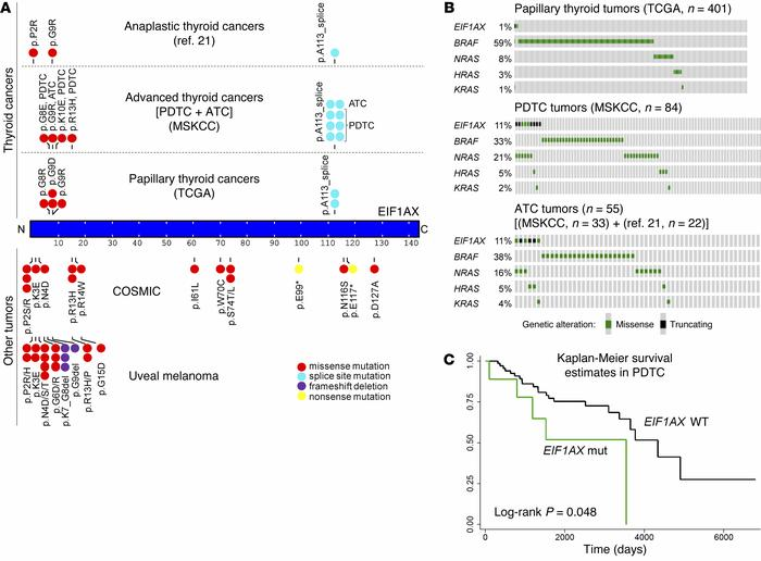 EIF1AX mutations and EIF1AX-RAS co-occurrence in thyroid cancers. (A) D...