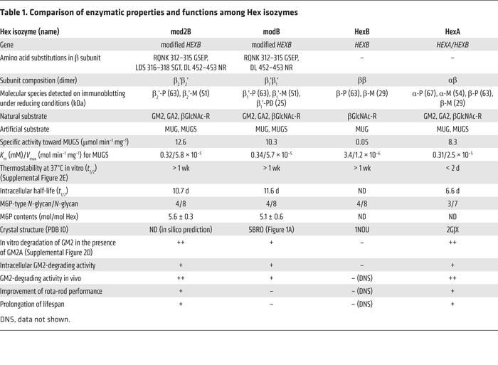 Comparison of enzymatic properties and functions among Hex isozymes