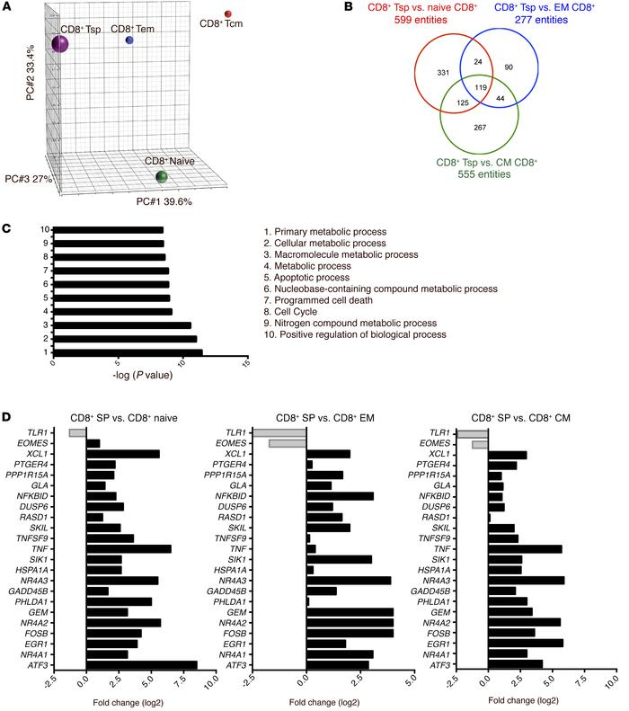 Human CD8+ Tsp cells express a distinct gene-expression profile. (A) PCA...