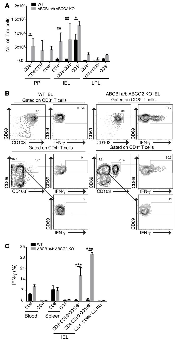 ABCB1a/b ABCG2 KO mice display increased inflammatory Trm compartment. (...