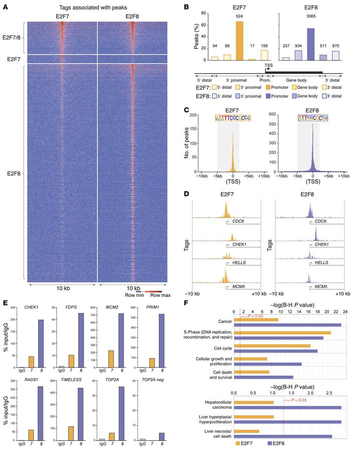 Identification of HCC-relevant E2F targets by ChIP-seq. (A) Tag-intensit...