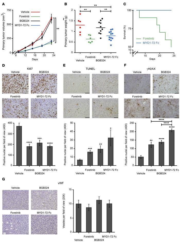 AXL inhibition reduces primary tumor growth. (A) Volume over time of ort...