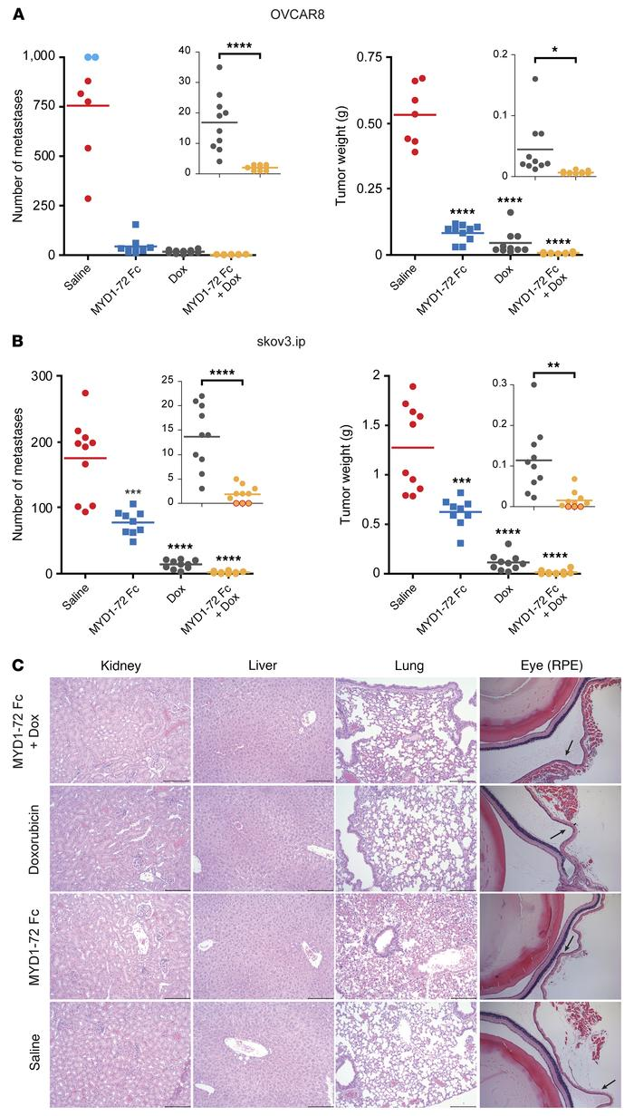 MYD1-72 Fc enhances the effects of chemotherapy in ovarian cancer. Inhib...