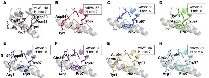 The 1E6 TCR makes distinct peptide contacts with peripheral APL residues...