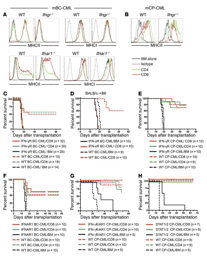 The IFN-γR on mBC-CML cells is required for GVH-induced MHC upregulation...