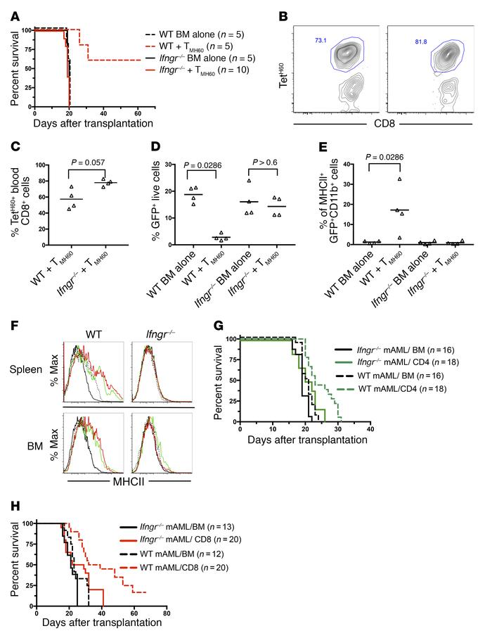 IFN-γ stimulation is required for TMH60-mediated GVL against H60+ mBC-CM...
