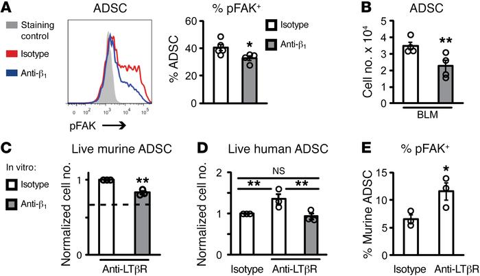 LTβR signaling maintains ADSC survival via β1 integrin activation. (A) E...
