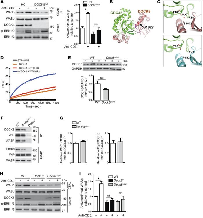 DOCK8 GEF activity mediates TCR-driven WASp activation. (A) Representati...