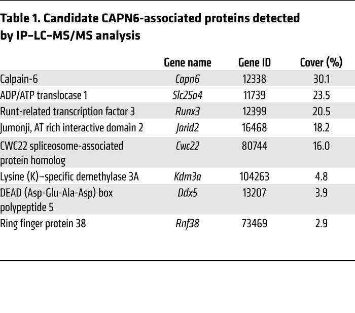 Candidate CAPN6-associated proteins detected by IP–LC–MS/MS analysis