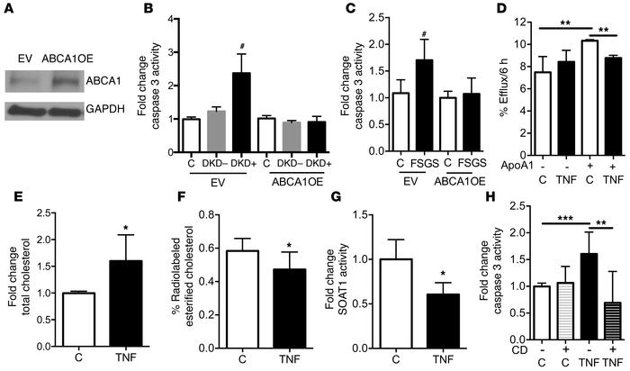 ABCA1 overexpression is sufficient to protect from sera-induced podocyt...