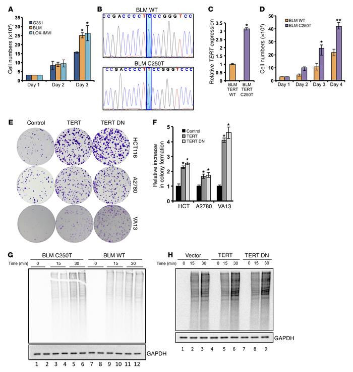 TERT increases proliferation and protein synthesis rates in cancer cells...