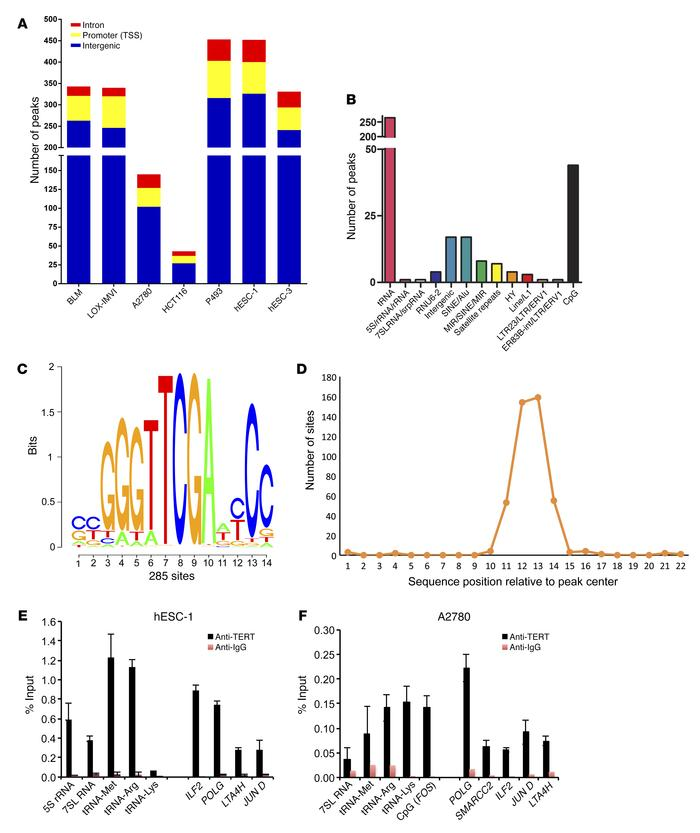 Annotation of TERT ChIP-seq peak regions. (A) Broad annotation of TERT C...
