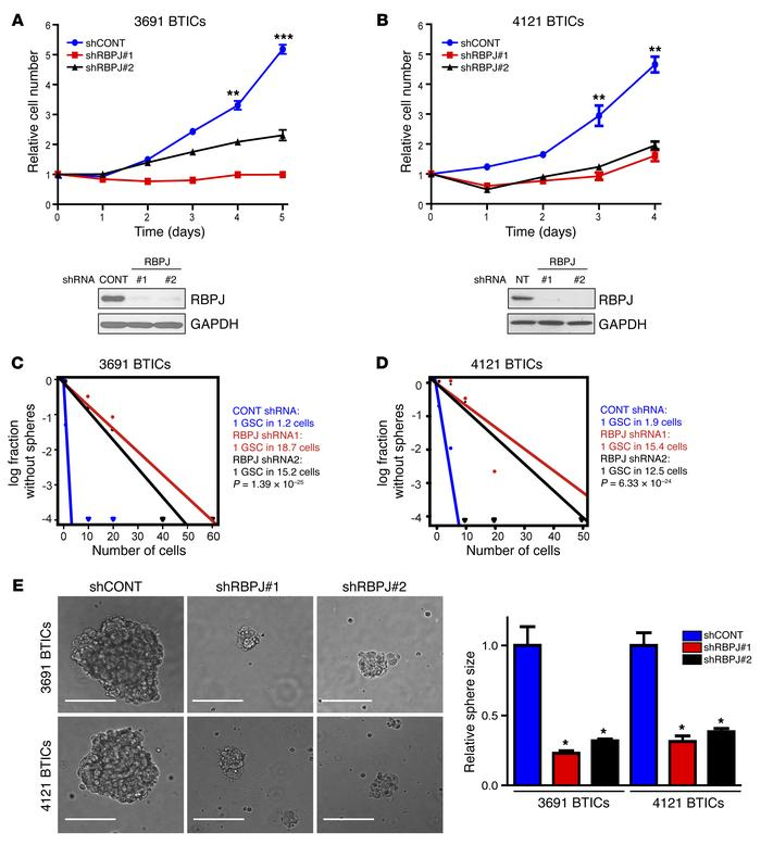 Targeting RBPJ decreases BTIC growth and self-renewal. (A and B) Effects...