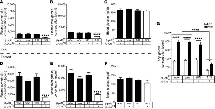 Ghrelin cell–selective β1AR deletion reduces plasma ghrelin, resulting i...