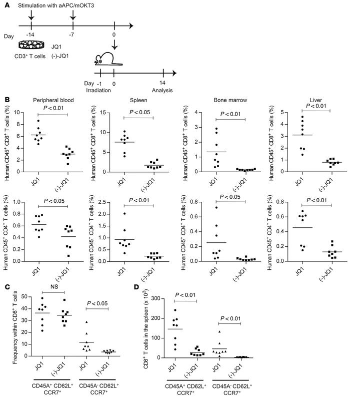 JQ1-treated T cells show enhanced in vivo persistence. (A) CD3+ T cells ...