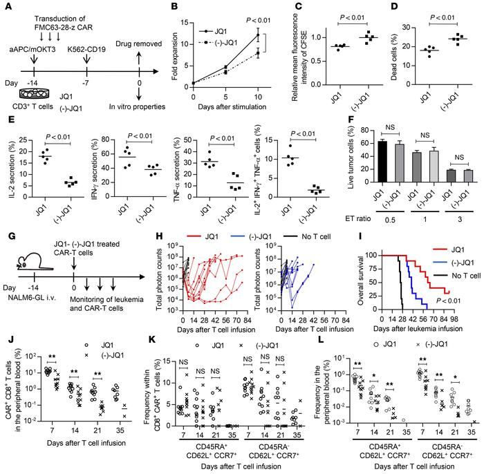 JQ1 treatment improves the antitumor activity of chimeric antigen recept...
