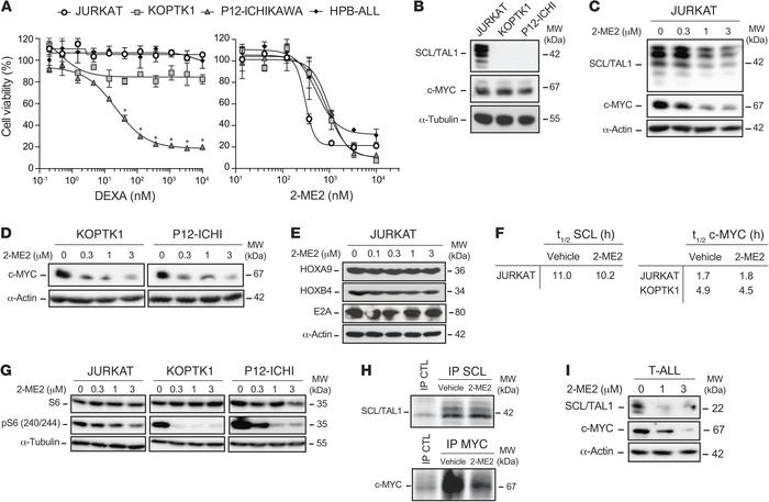 2-ME2 inhibits glucocorticoid-resistant T-ALL cells and targets MYC prot...