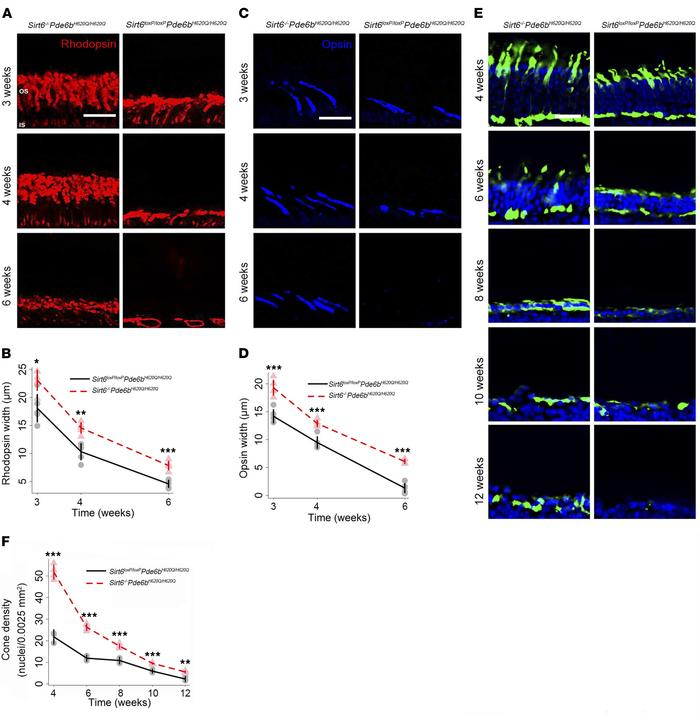 Sirt6 deficiency promotes photoreceptor survival and preserves cellular...