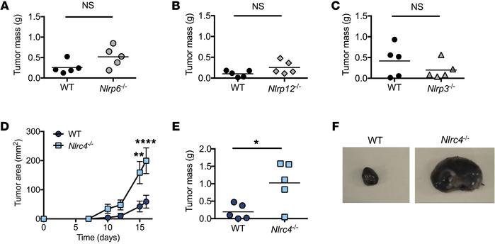 NLRC4 protects against B16F10 tumor growth in vivo. (A–F) WT and Nlrp6–/...