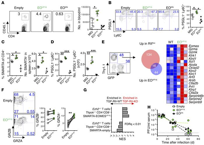 EOMES regulates accumulation and differentiation of CD4 T cells during c...