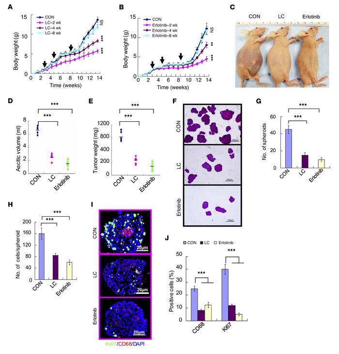 Inhibition of EGFR reduces spheroid formation, cell proliferation, and o...