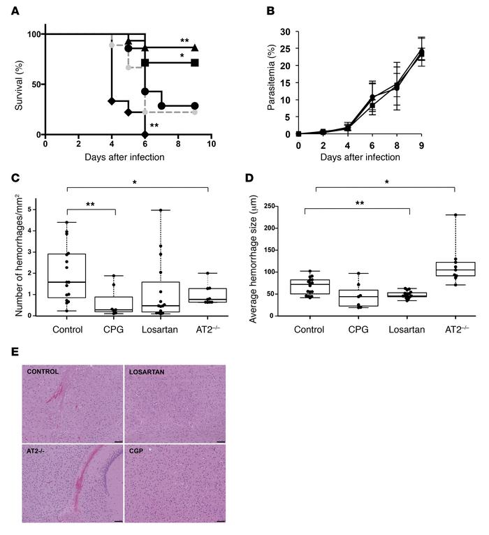 Modulators of Ang II receptors inhibit experimental cerebral malaria. Gr...