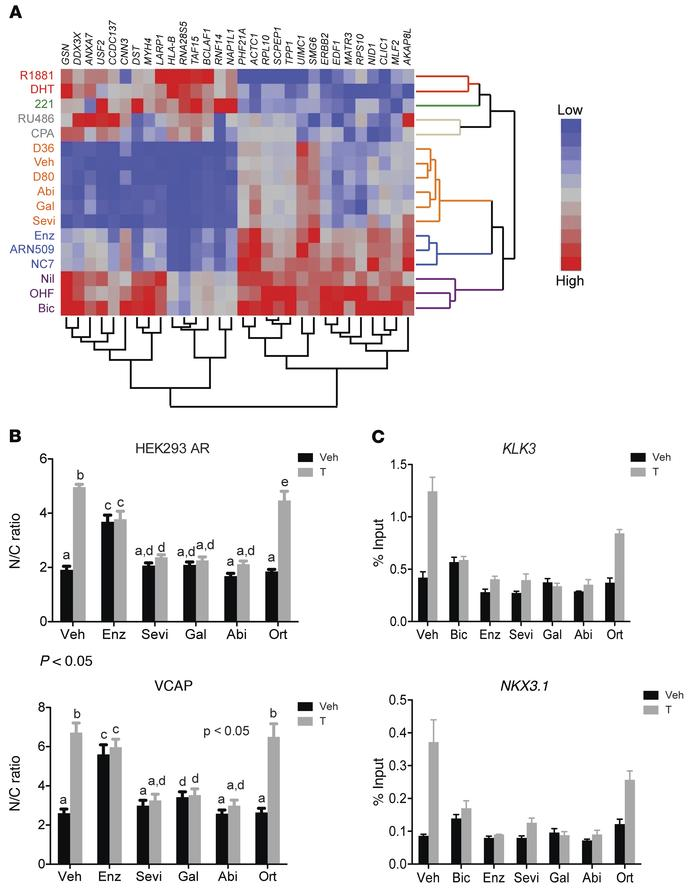 CYP17 inhibitors are mechanistically distinct antiandrogens. (A) CYP17 i...