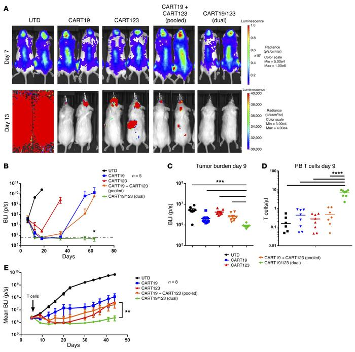 Dual CART19/123 cells are highly effective against B-ALL in vivo. (A) NS...