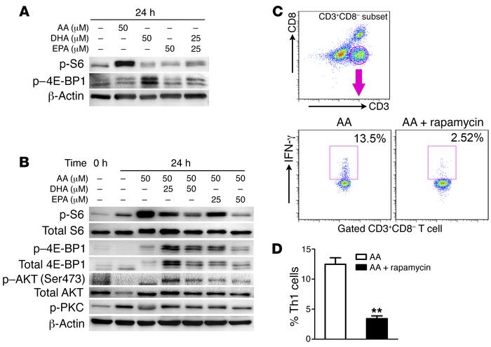 ω-3 PUFAs regulate Th cell differentiation through the inhibition of mTO...